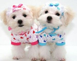 Pink Is For Girlzzz N Blue Is For Boyzz Cute Dog Clothes