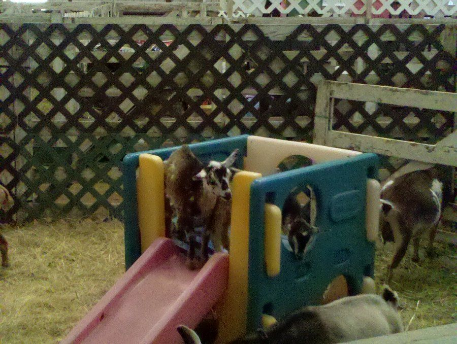 Goat Playground By Shadowsettles On Deviantart Goat Playground Raising Goats Goats