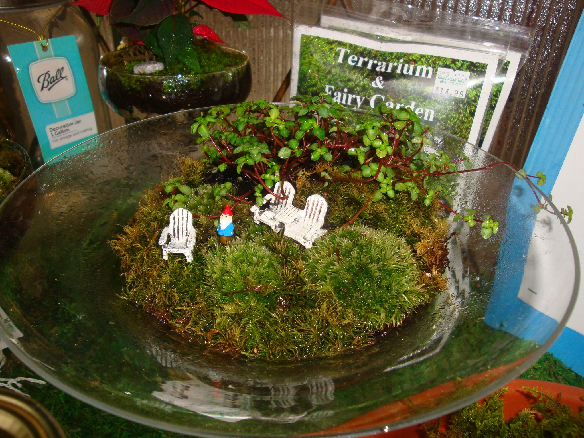 How cute is this moss planting with micro-mini gnome and chairs!