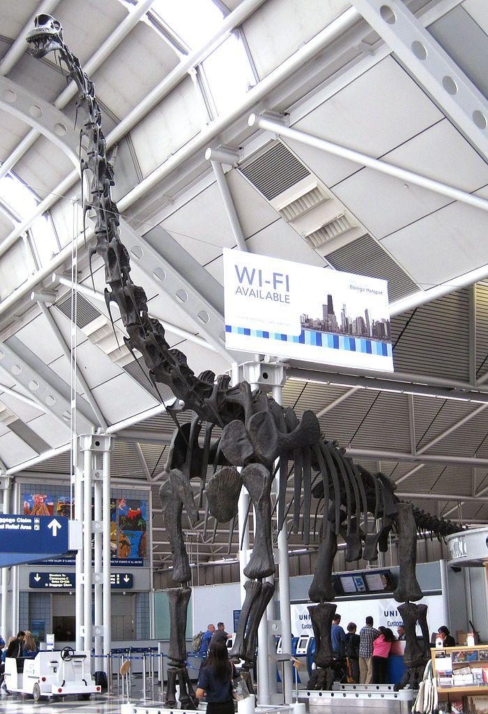 Moulage de l'holotype et pièces manquantes reconstruites de Brachiosaurus altithorax, au terminal B de l'aéroport international O'Hare. Auteur : James St. John. 2012