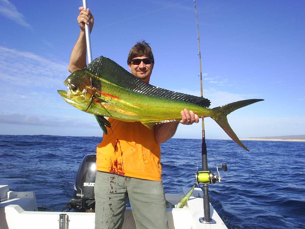Dorado fish in cabo mexico fish pinterest cabo and fish for Fishing in cabo