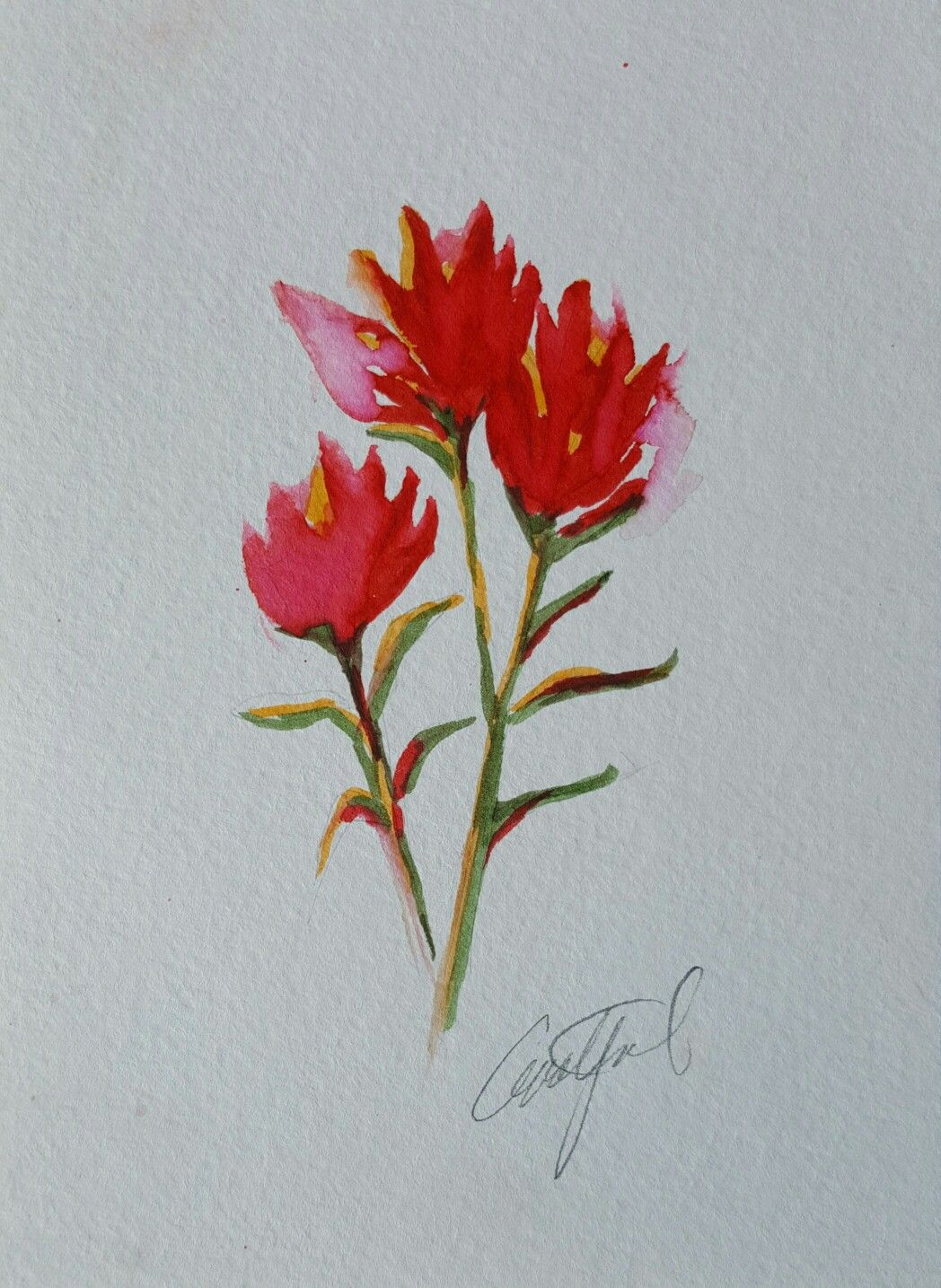 Works Of Wyoming Paintbrush Tattoo Watercolor Flowers Indian