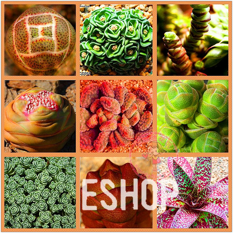 Cheap seeds direct, Buy Quality plant garden seeds directly from China plant vegetable seed Suppliers: start