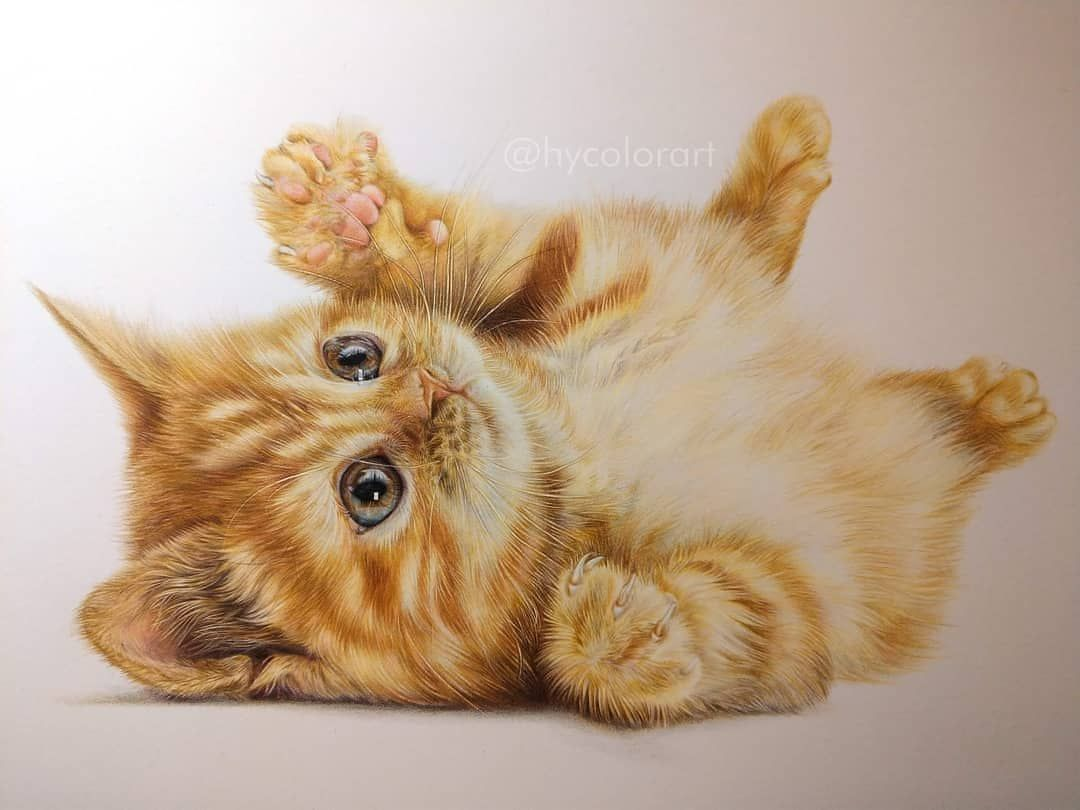 Incredible Kitten Artwork With Colored Pencils By Hycolorart Kitten Artwork The Incredibles