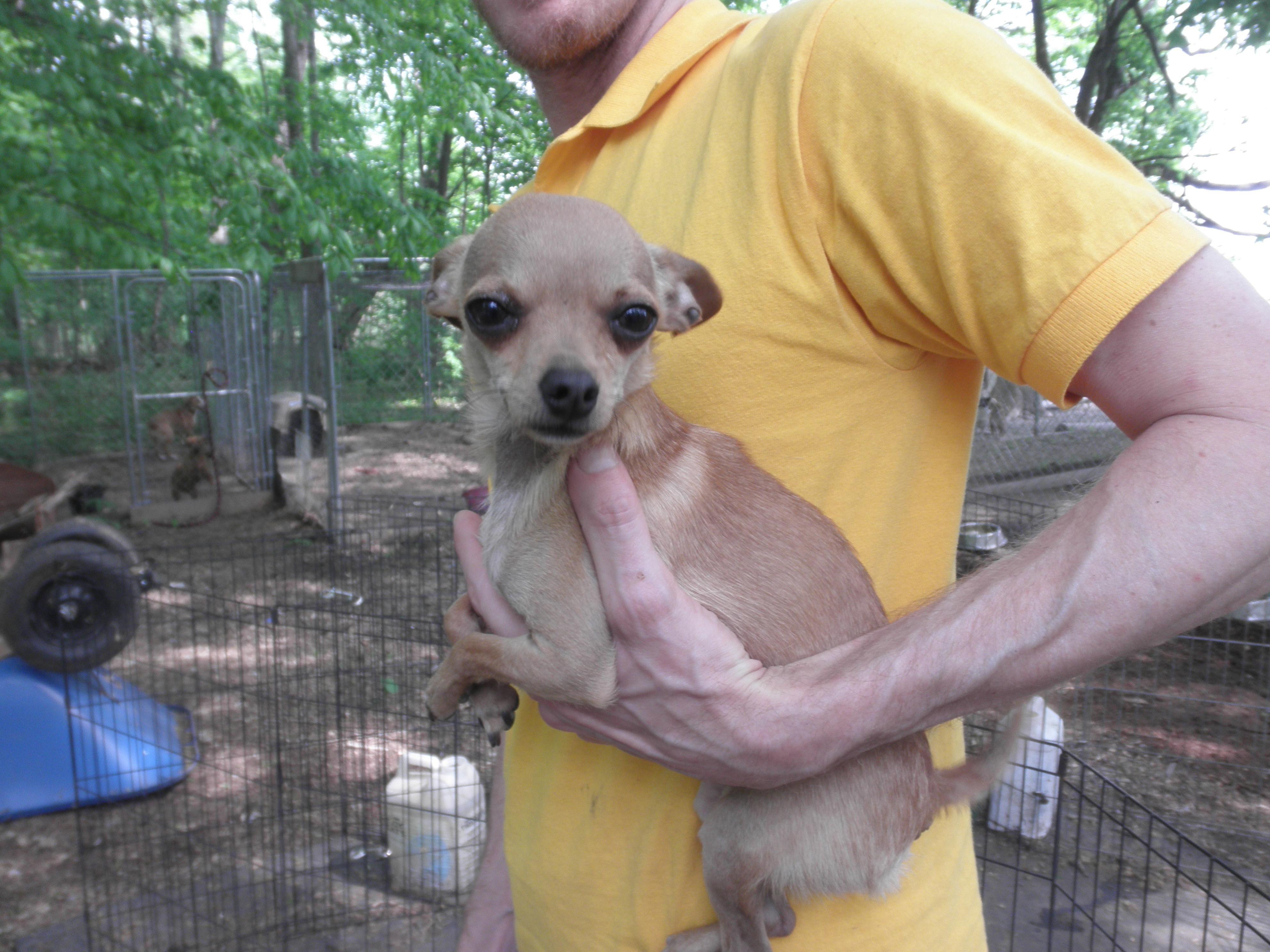 Adopt Stuart Littel On Dog Adoption Tiny Dogs Big Dogs