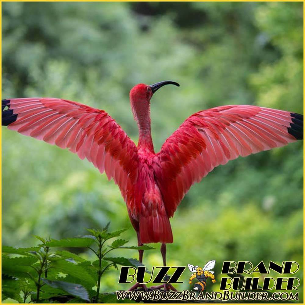 Sample Post in the Animal - Wild Africa Category. We have over 60  differrent Categories to choose from. https… | Animals beautiful, Beautiful  birds, Animals images