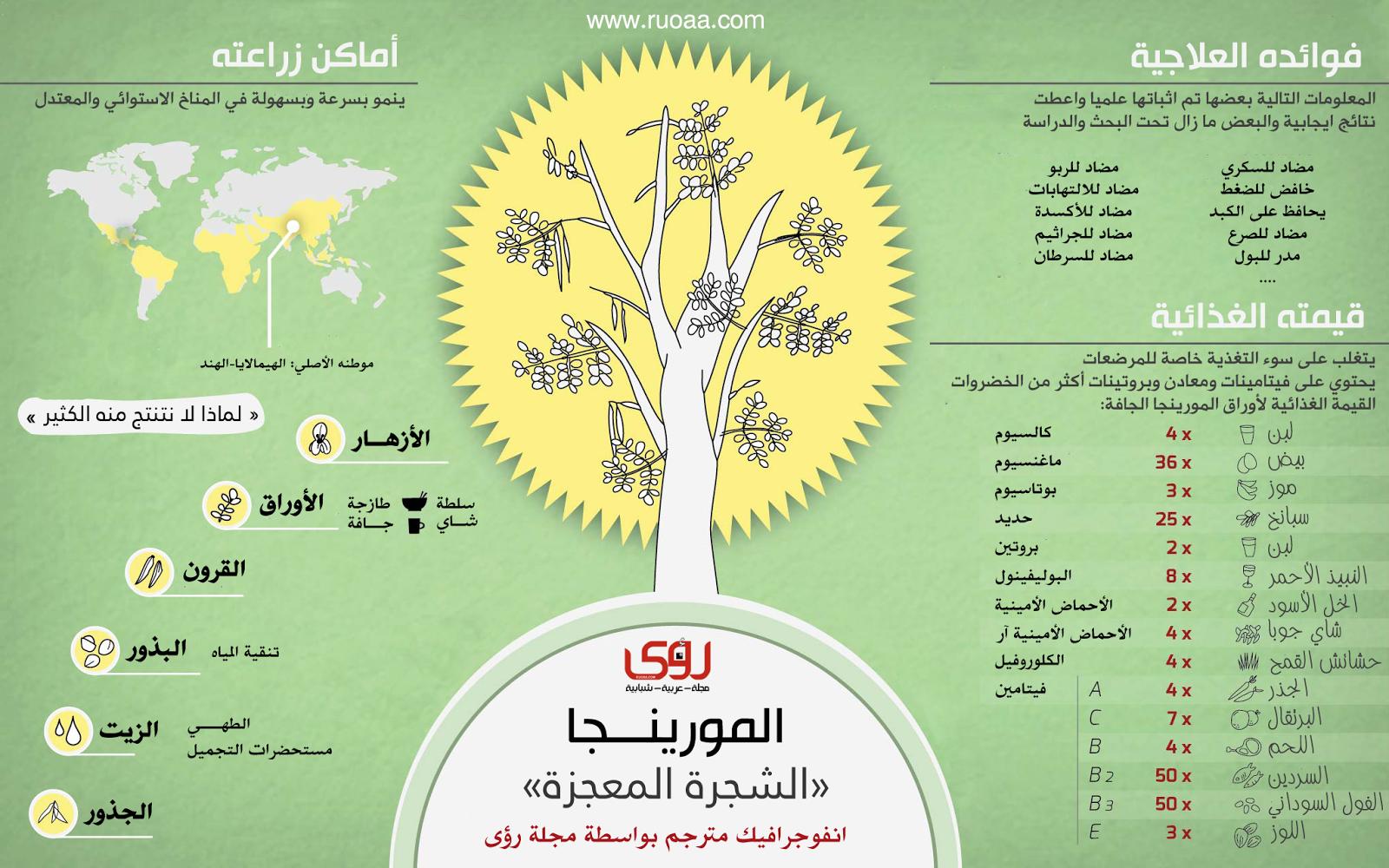 إنفوجرافيك فوائد شجرة المورينجا الشجرة المعجزة Moringa Benefits Moringa Oleifera Moringa