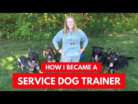 Are You Considering A Career As A Therapy Dog Trainer Have A Look