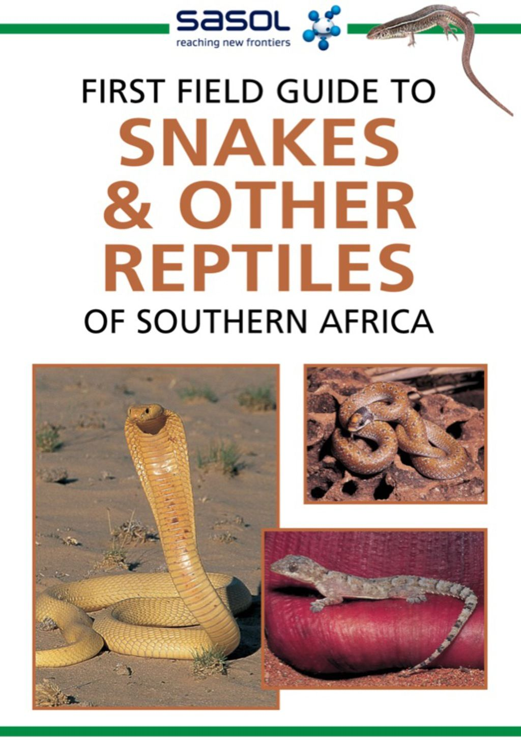 First Field Guide To Snakes Other Reptiles Of Southern Africa
