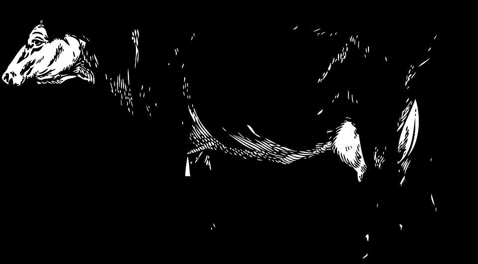 Именем, картинки коровы черно белые