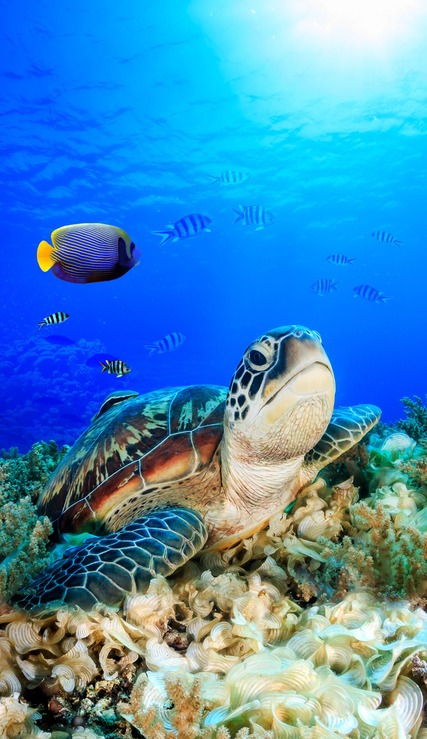 Pin by Lollikins on Summer Wallpaper Baby sea turtles