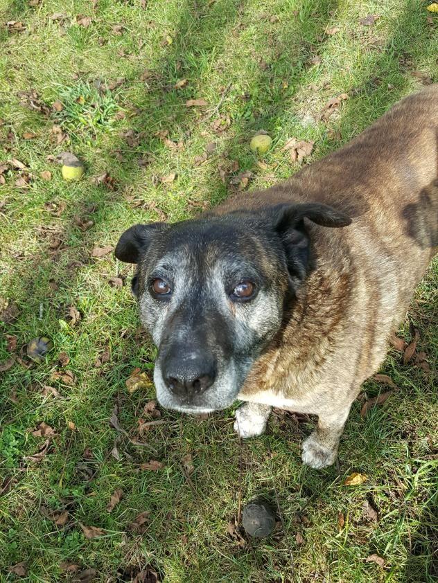 Adopt Mocha On Dogs Puppies Dog Language Dogs