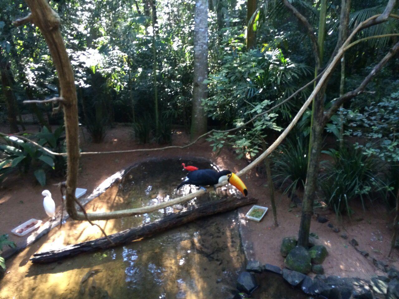 Tucano em Foz do Iguaçu