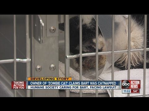 Owner sues humane society over custody of Bart, the cat who returned from the grave | Life With Cats