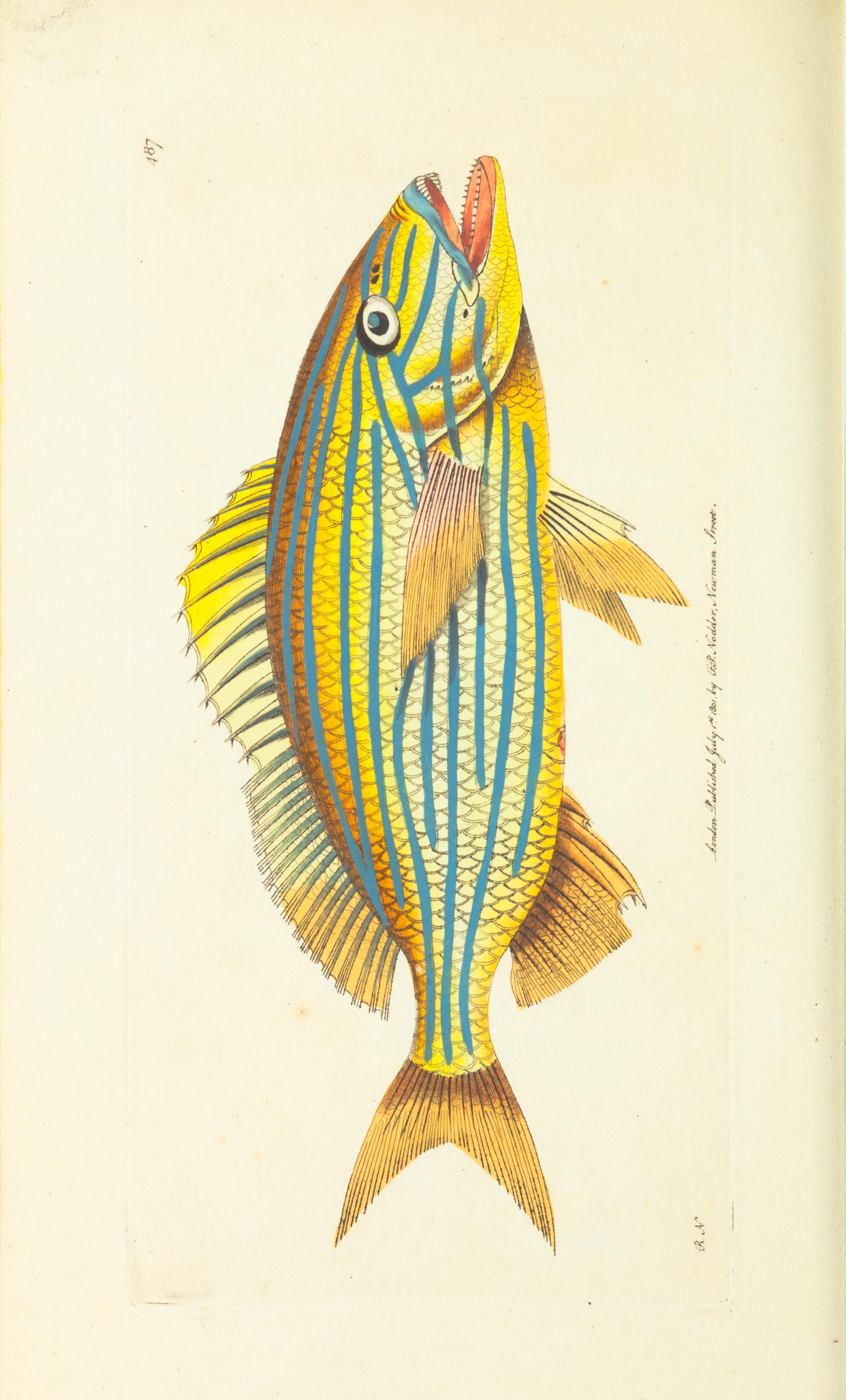 V 12 The Naturalist S Miscellany Or Coloured Figures Of Natural Objects Bio Fish Art Fauna Illustration Fish Illustration