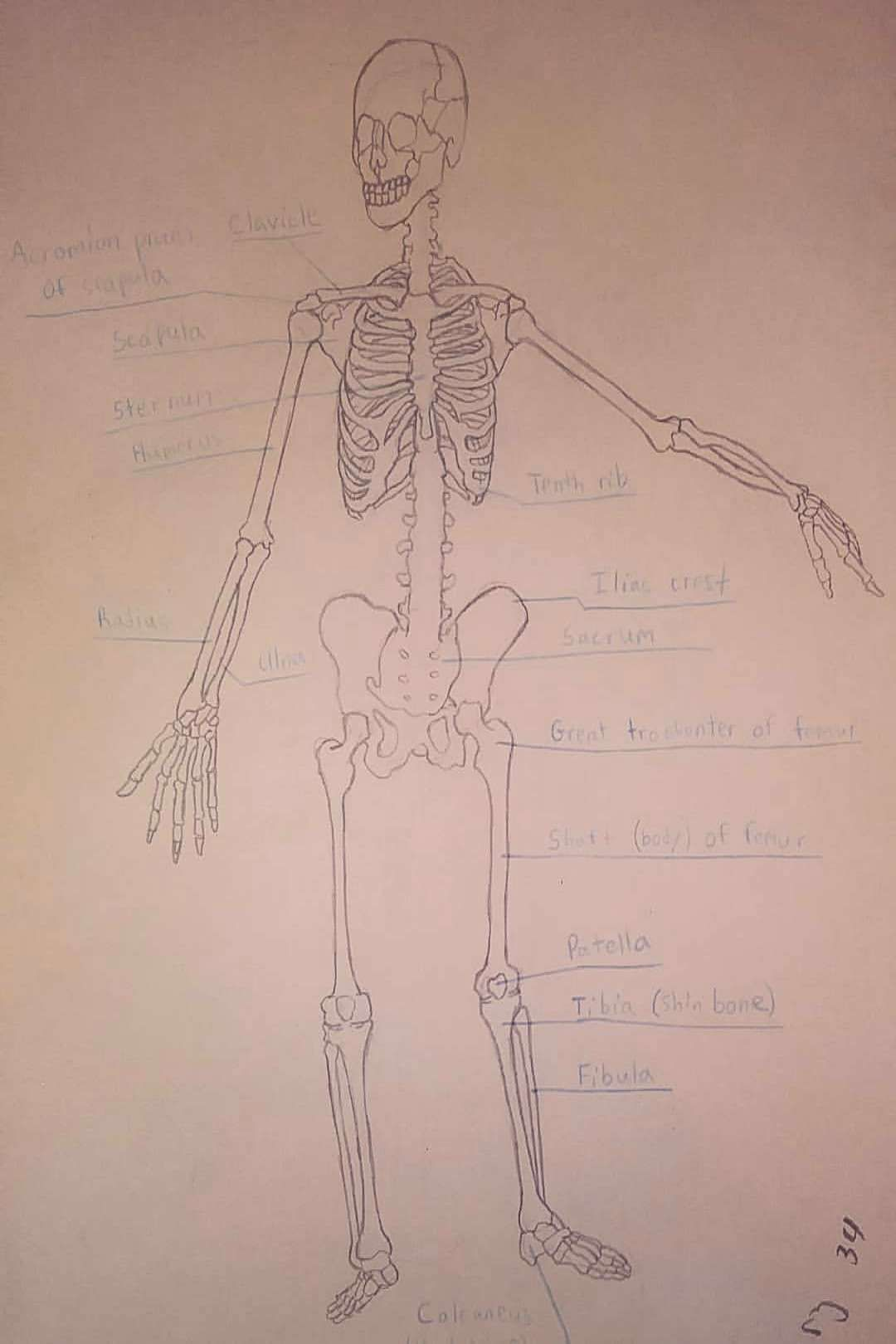 Pin On Anatomy