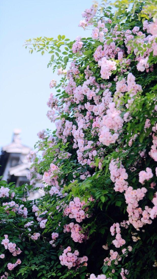 Spring flowers wallpaper backgrounds. Springaesthetic