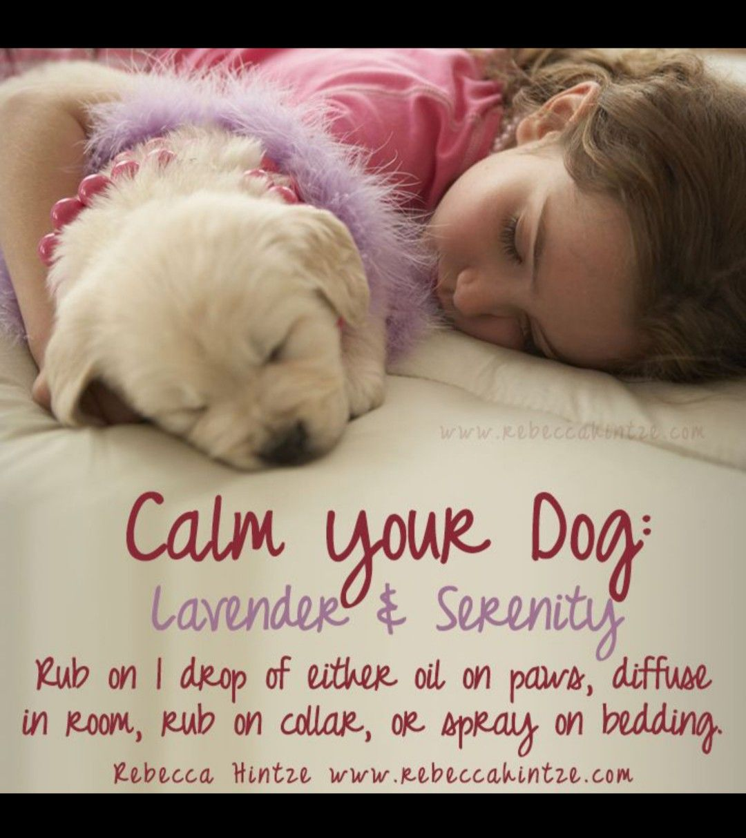 Calm your dog with lavender dog calming essential oils
