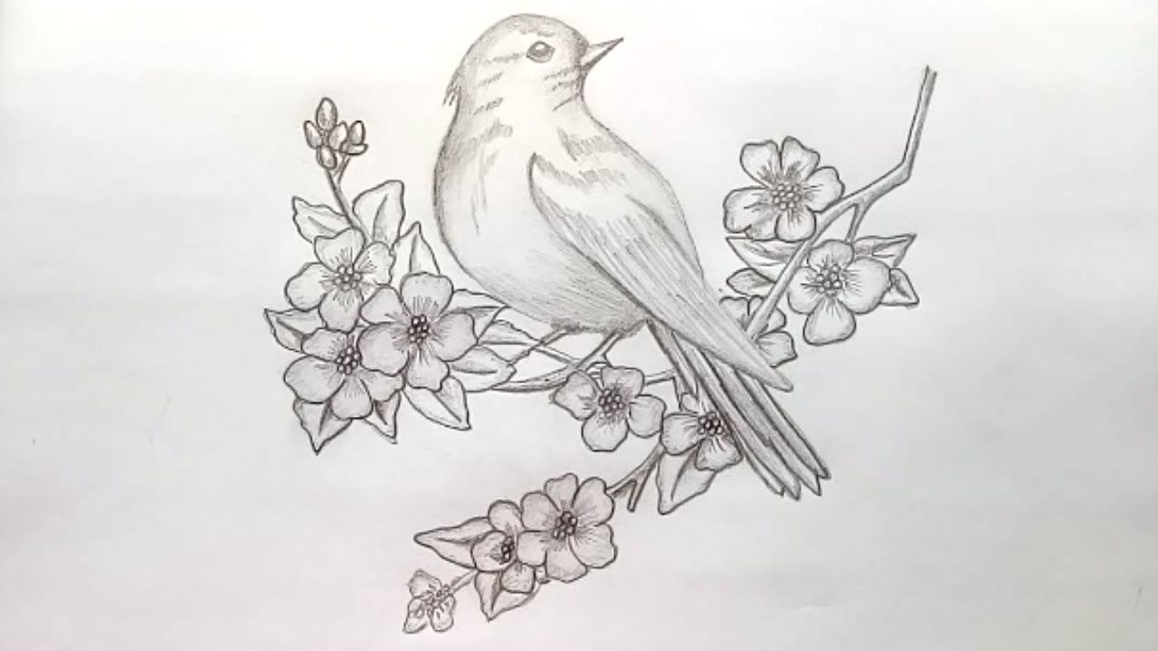 Image result for pencil sketches of flowers and birds
