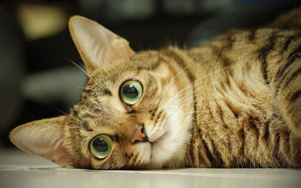 Beautiful cat eyes kitcats uc pinterest beautiful cats cat