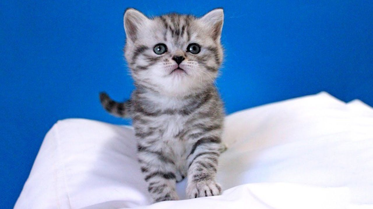 Cute Kittens Play with new toys Purr fect video