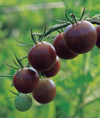 Tomato Black Cherry Black Cherry Tomato Cherry Tomato 400 x 300