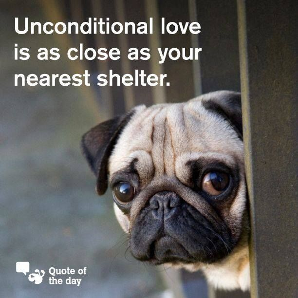 Unconditional Love Is As Close As Your Nearest Shelter Rescue