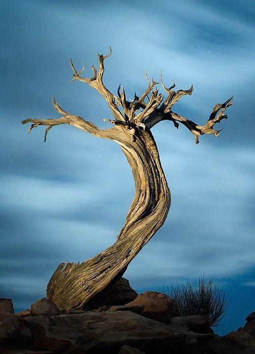 멋진 나무 - Google 검색