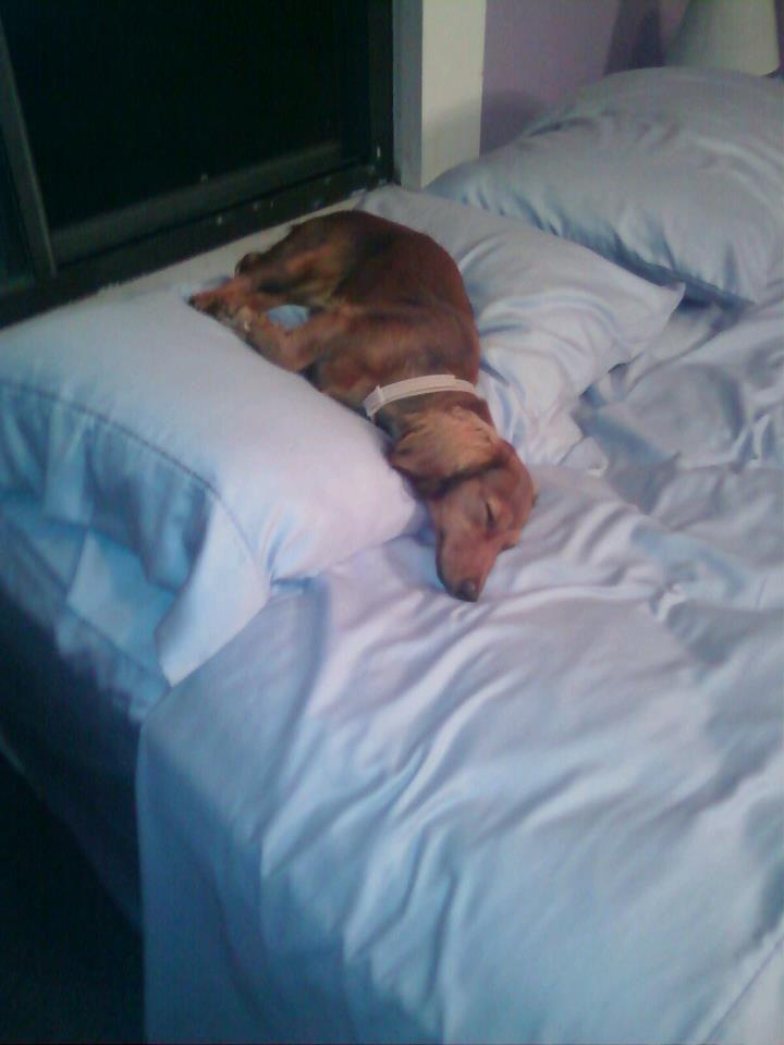Sleeping Upside Down