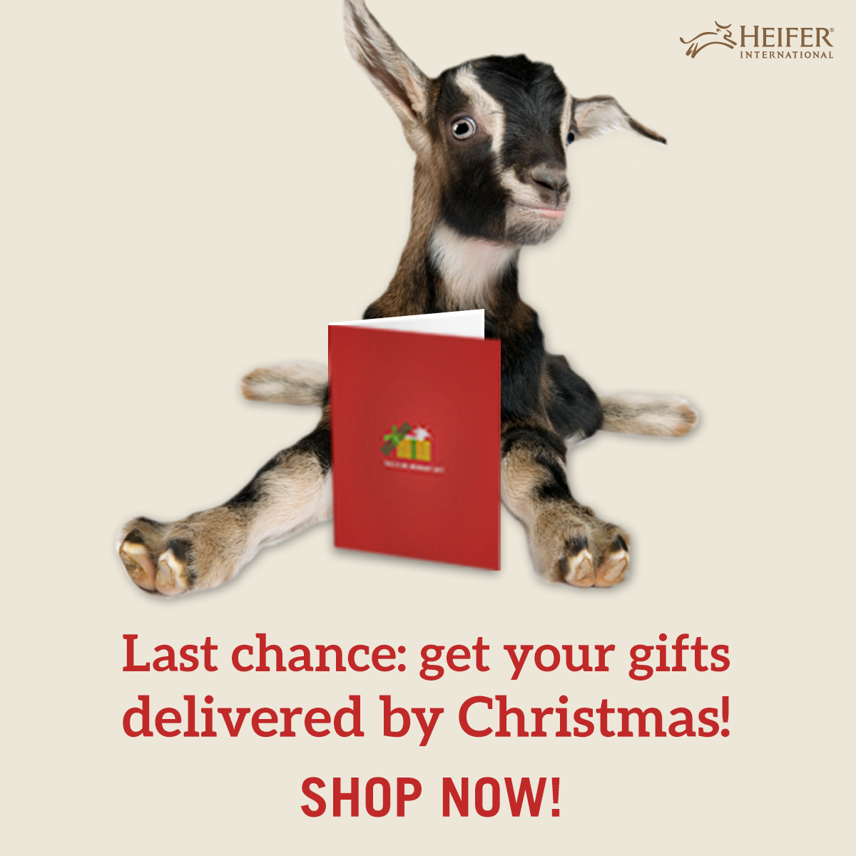 Giving your friend a Heifer gift this Christmas? The deadline to have an honor card mailed to them by Christmas Eve is December 11th!