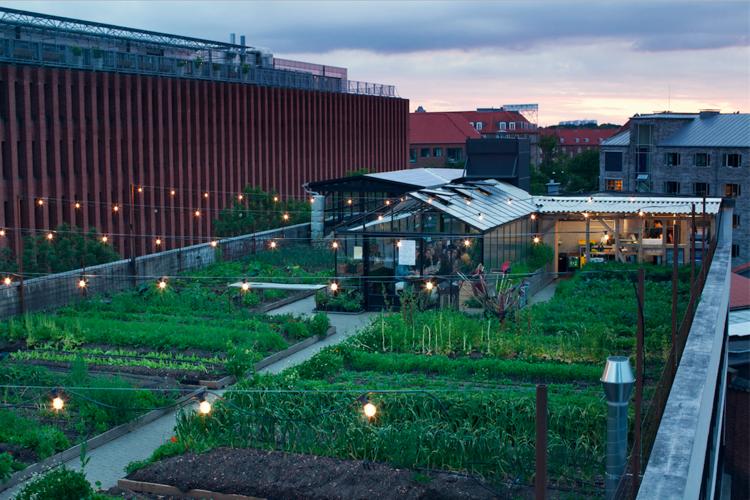 Stedsans Rooftop Farm Restaurant Copenhagen Garden Rooftop Rooftop Terrace Copenhagen