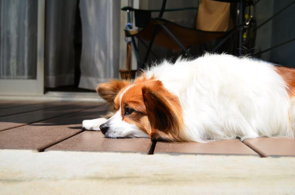 犬にも生まれ変わりはあるの 亡くなった犬と同じような行動をすることがあります 犬 生まれ変わり お役立ち