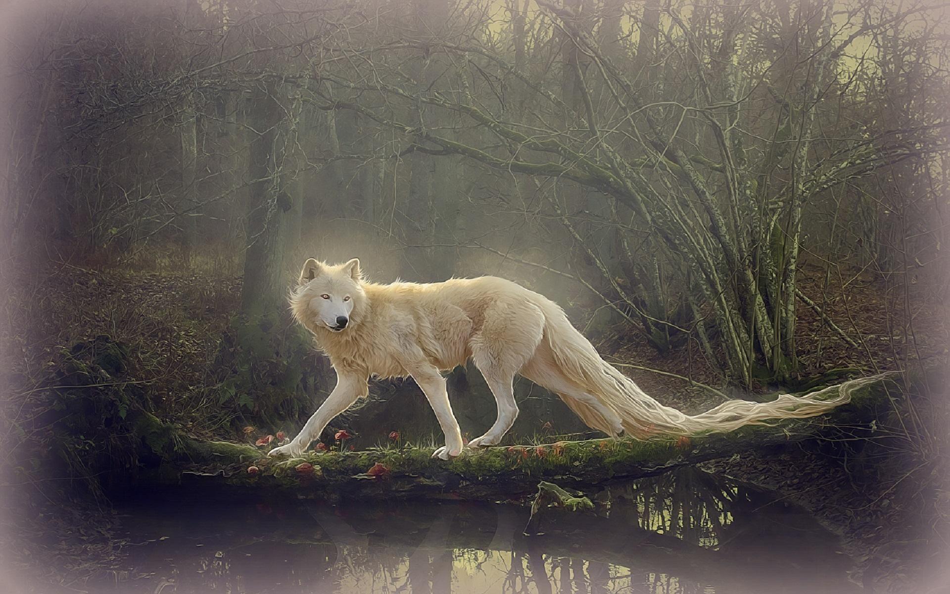 Beautiful White Wolf Wallpaper Hd Best Wallpaper Hd Beautiful Wolves Wolf Wallpaper White Wolf
