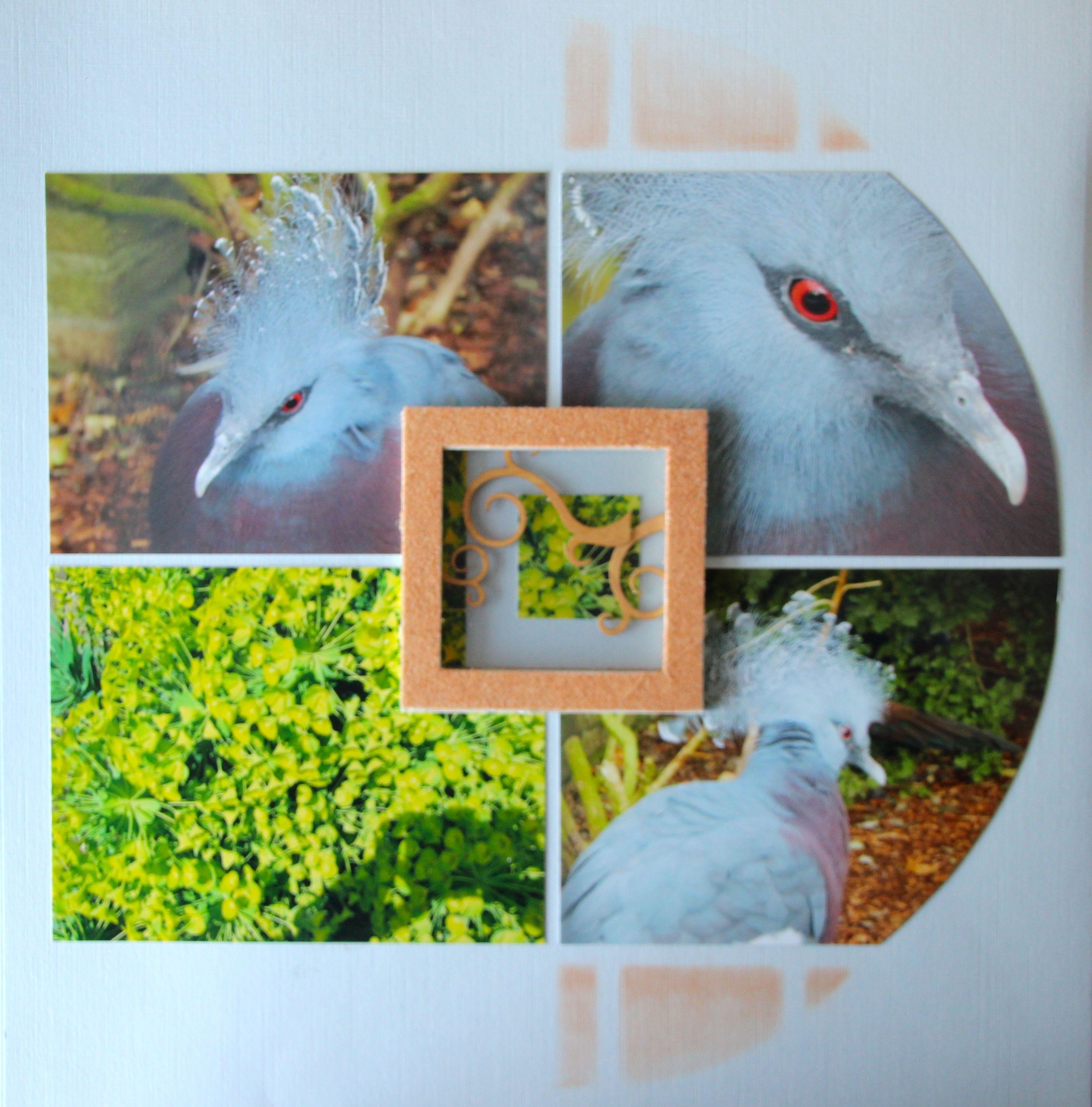 AZZA duo Grote cirkel en eigen creatie Voorblad vogel