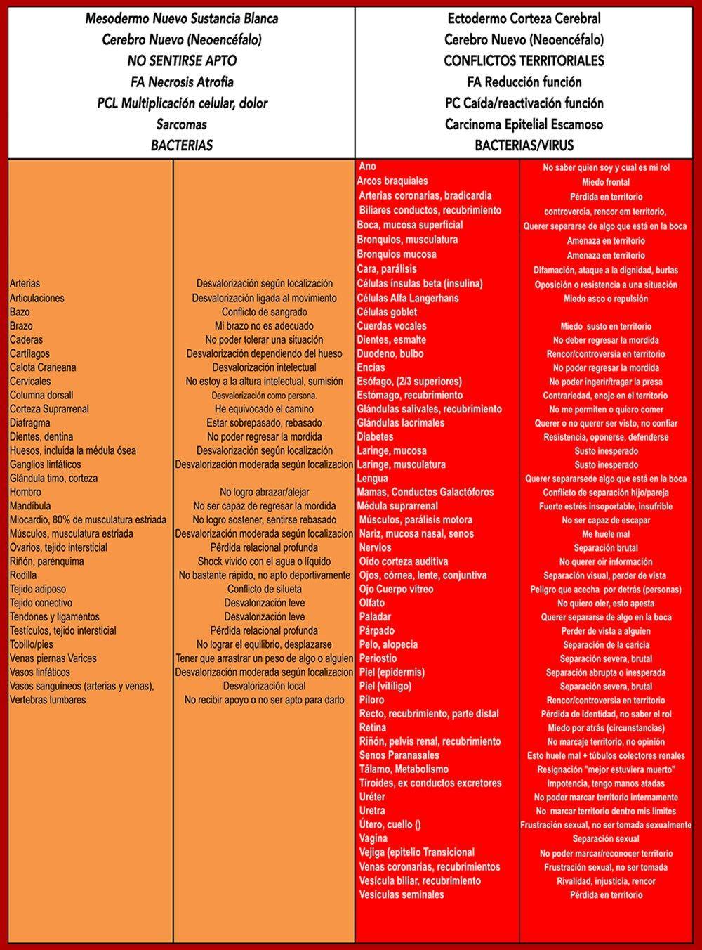 LISTADO ORGANOS ALFABETICO2 | hamer | Pinterest | Bioneuroemocion ...