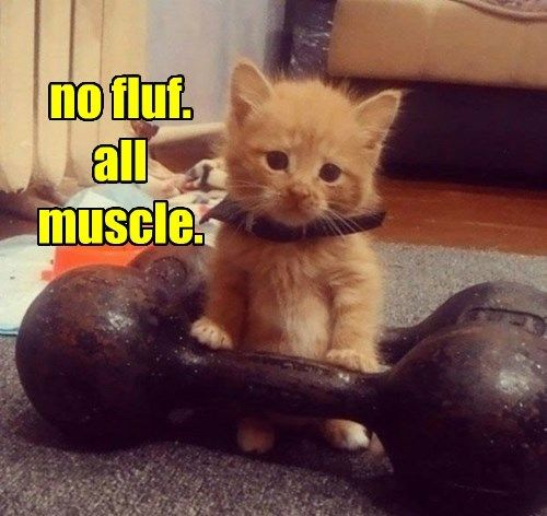do you even lift dog pinterest dog cat and animal