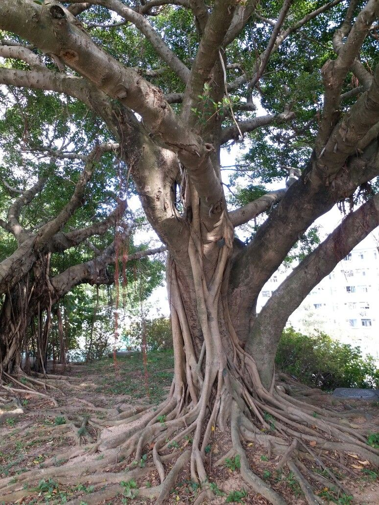 Pin by zecca wong on trees Tree, Plants, Garden