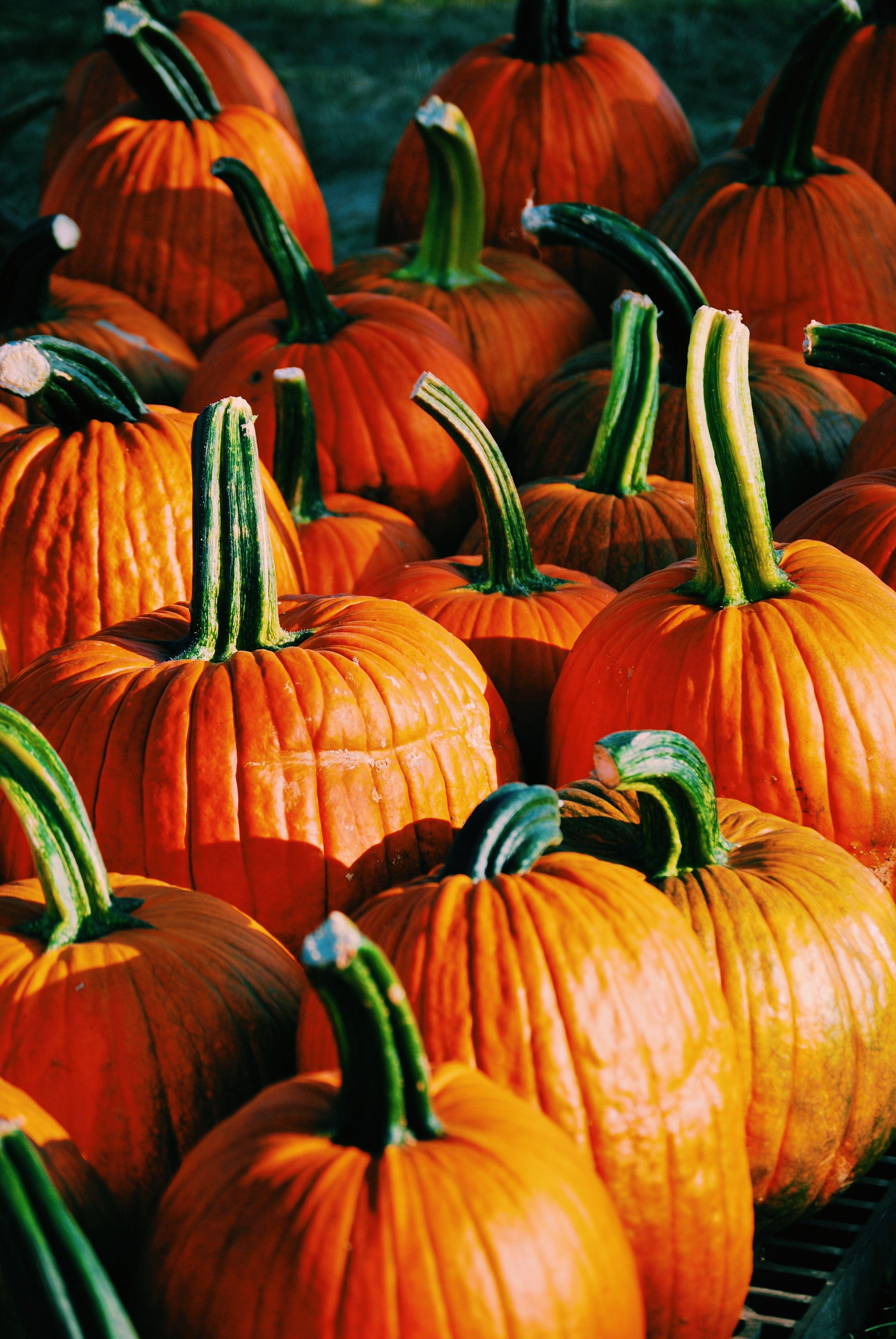 Pumpkin iPhone wallpaper. fall wallpaper Pumpkin