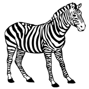 Zebra Malvorlage Zum Ausdrucken Und Ausmalen Kostenlos Animal
