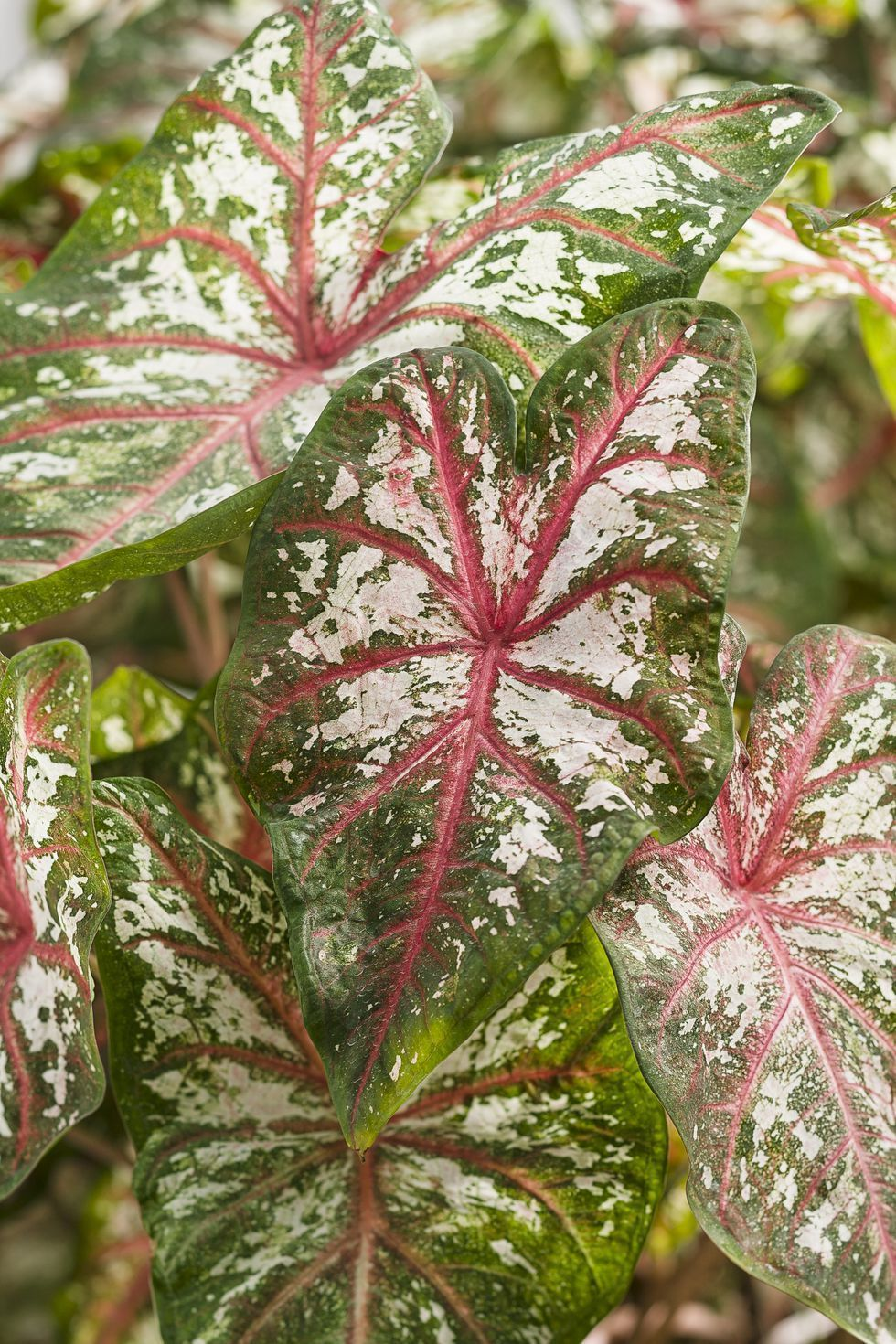 Best Shade Loving Plants Good Plants That Grow in Shade