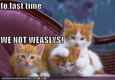 Ginger Kitties Harry Potter Funny Pictures Kittens And Puppies Funny Cats