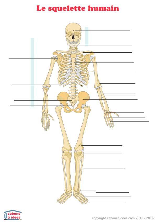 Utilisez cette fiche pour apprendre la composition du corps humain.  Retrouvez les autres fiches à 2995ea5365f