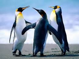 Resultado de imagen de como son las patas de los pinguinos