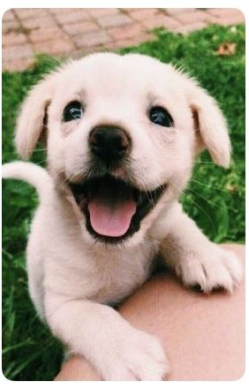 Image By Allmac On Animals Dogs Cute Animals Cute Dogs