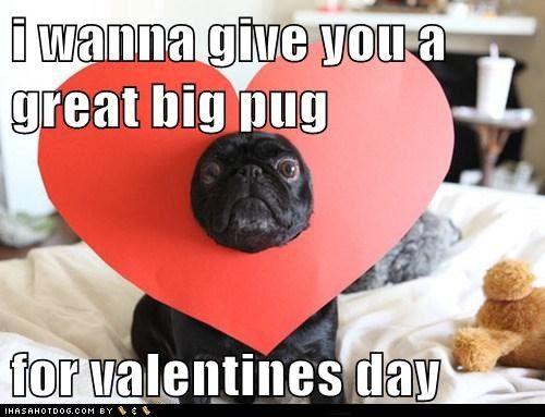 Valentine Pug Funny Valentine Memes Valentines Day Memes Pugs Funny