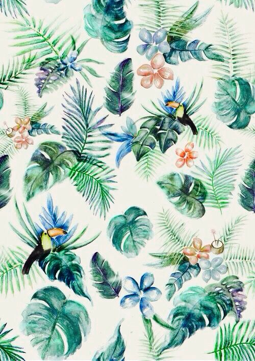 Aninimal Book: tropical tumblr - Поиск в Google | FM | Pinterest ...