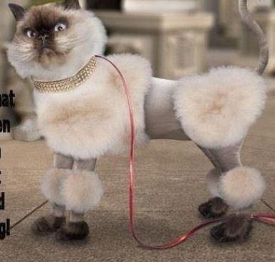 Stop Laughing!! | Cat grooming, Cat haircut, Cat g