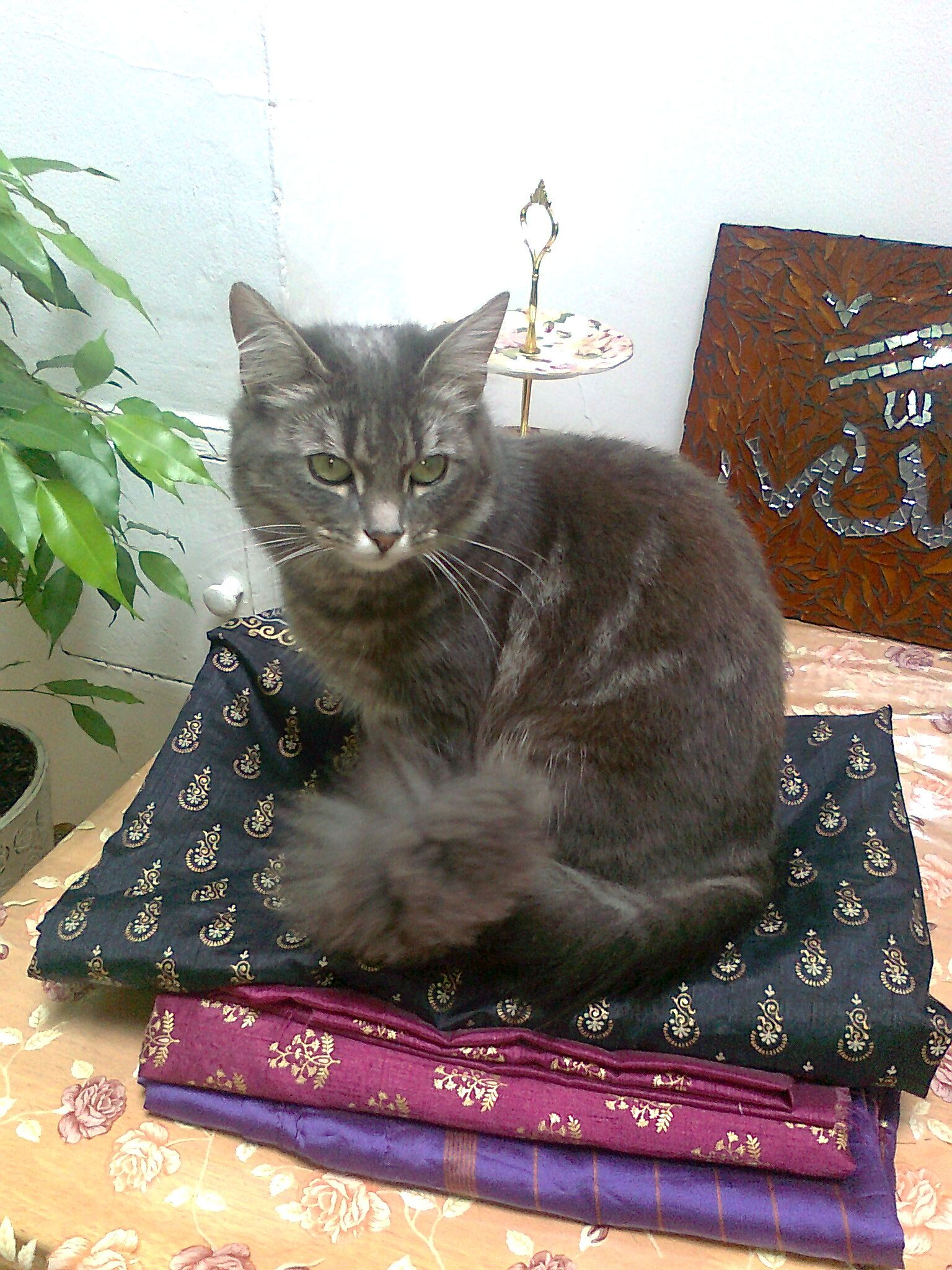 Minousa Miauw