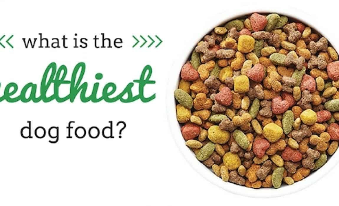 What Is The Healthiest Dog Food Dog Food Recipes Healthy Dog