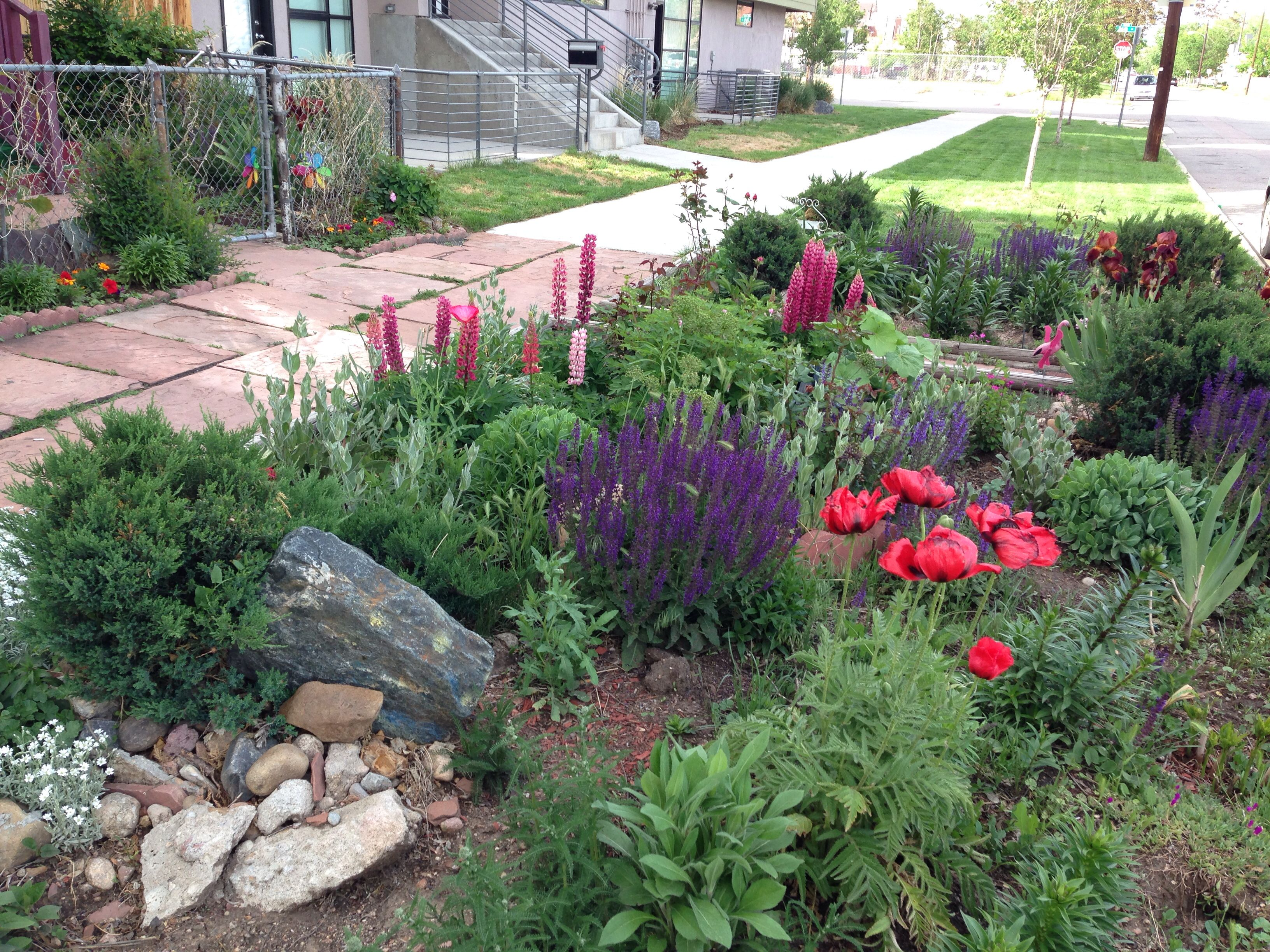 Curtispark Denver Curbside Xeriscaping Garden Xeriscape